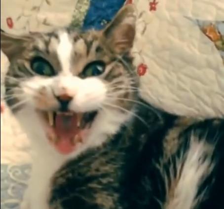 nie budź kota