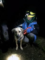 Labrador uratowany z przepaści