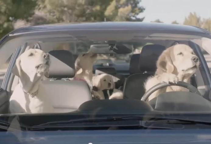 rodzina retriverów w Subaru